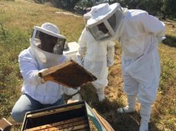 Yosef's honey experience